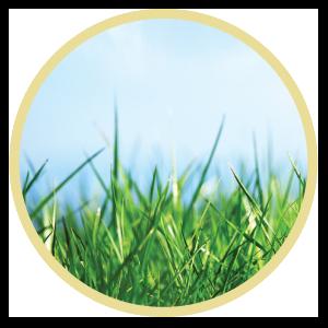 Biomass Portion